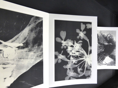 Flowers collected at Oswieçim printed as photograms. © Rose Smith