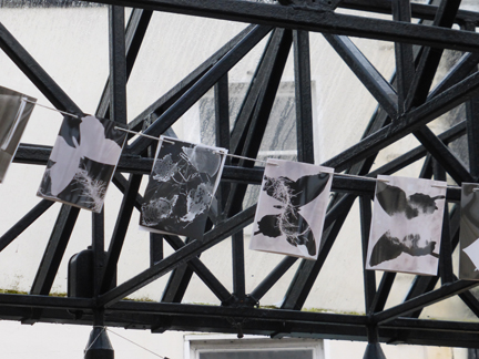 A close up of some of the photograms