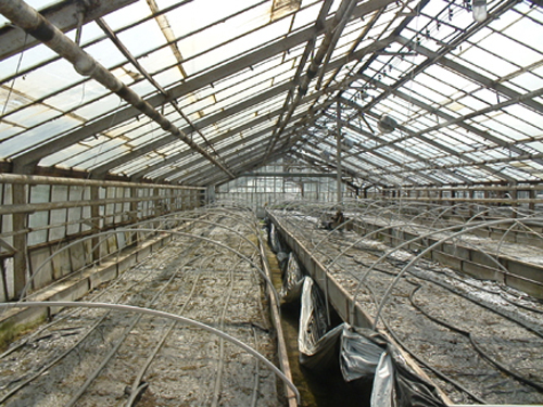 One of the original greenhouses. © Another Space